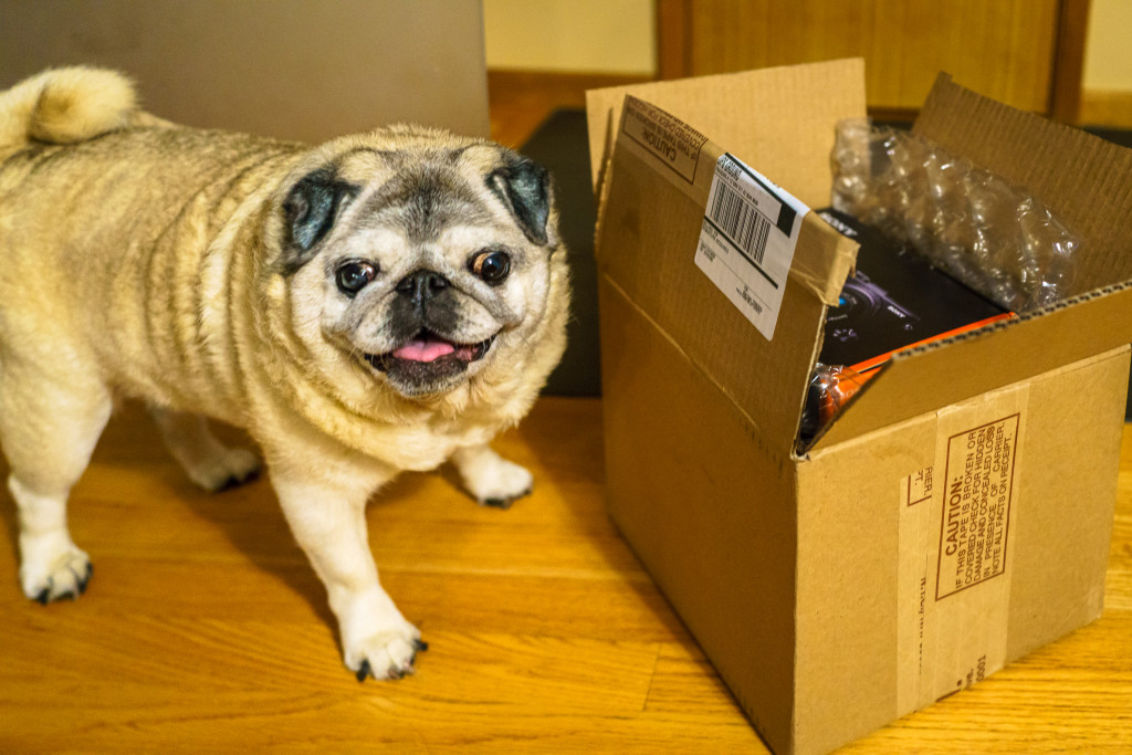 """Cap'n the Pug loves camera unboxing and associates it with """"treats."""""""
