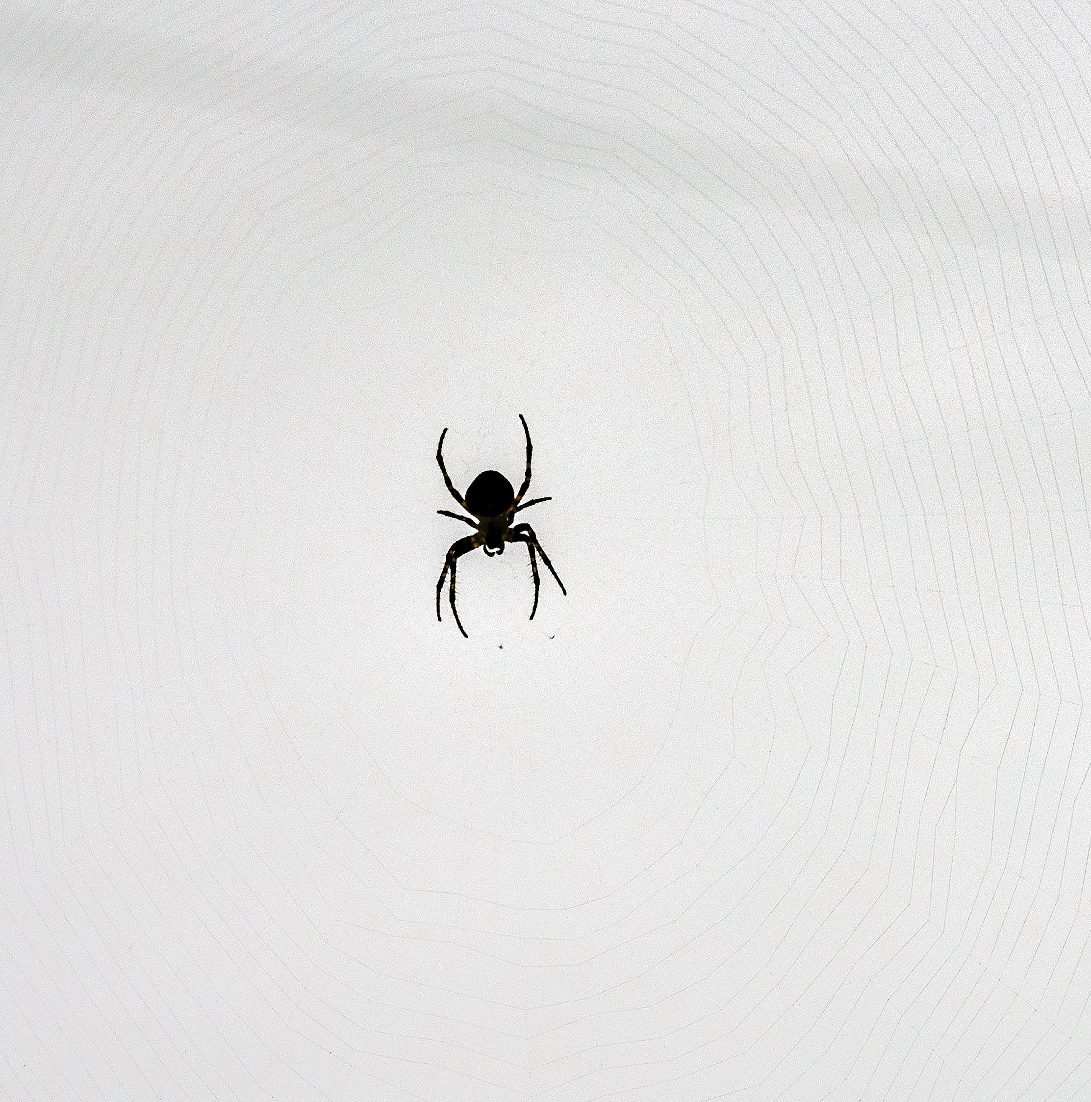 raining_so_hard_spiders_insane_zoom